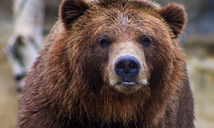 What to Do If You Encounter A Bear