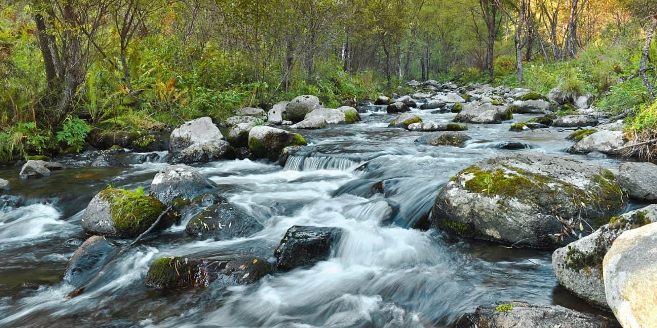 Is it Safe To Drink Water From A Stream?