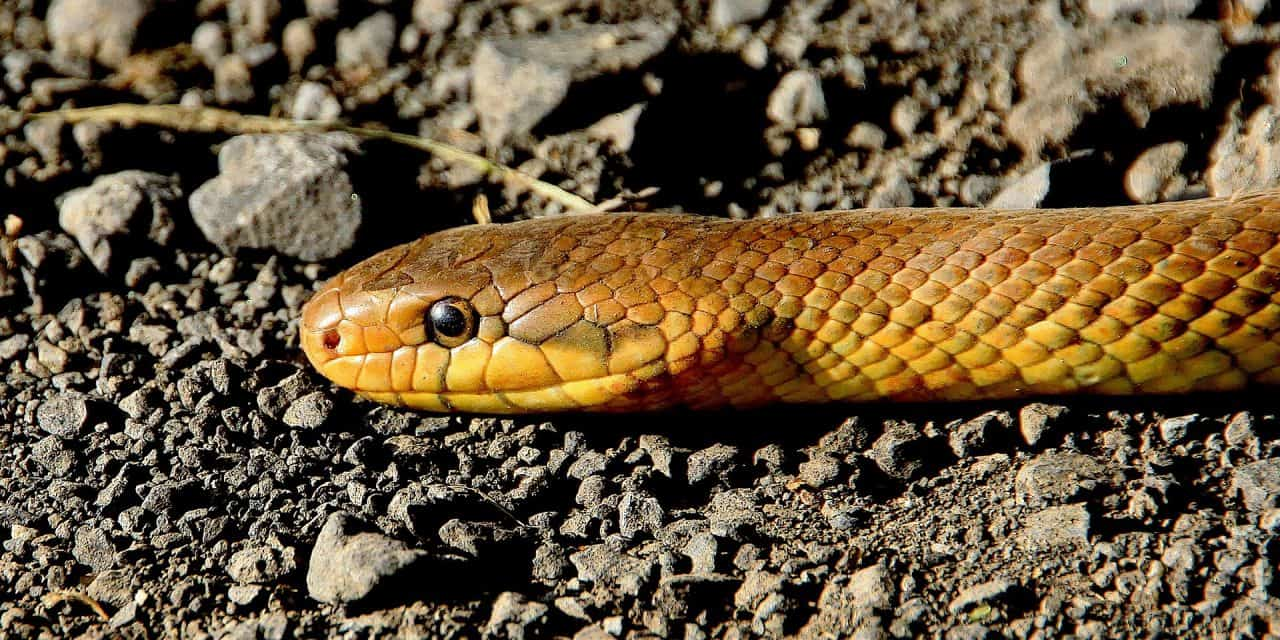 5 Simple Ways To Keep Snakes Away From Your Home