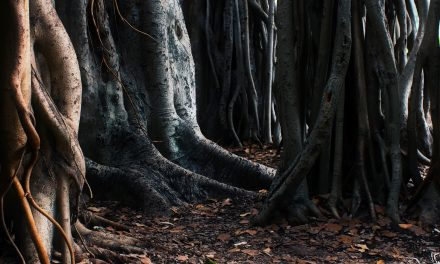6 Strange Things People Have Found in The Woods