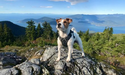 The Ultimate Guide to Hiking With Your Dog