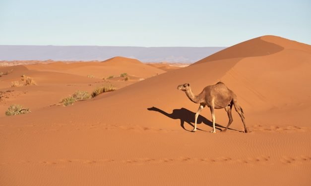 How Have Animals Adapted To Wild Desert Environments?