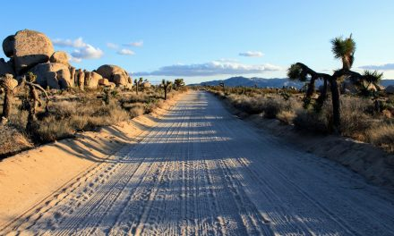 5 Best Joshua Tree Camping Spots for Your Next Trip