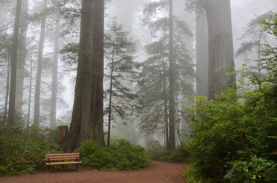 Top 5 Sequoia National Park Camping Spots