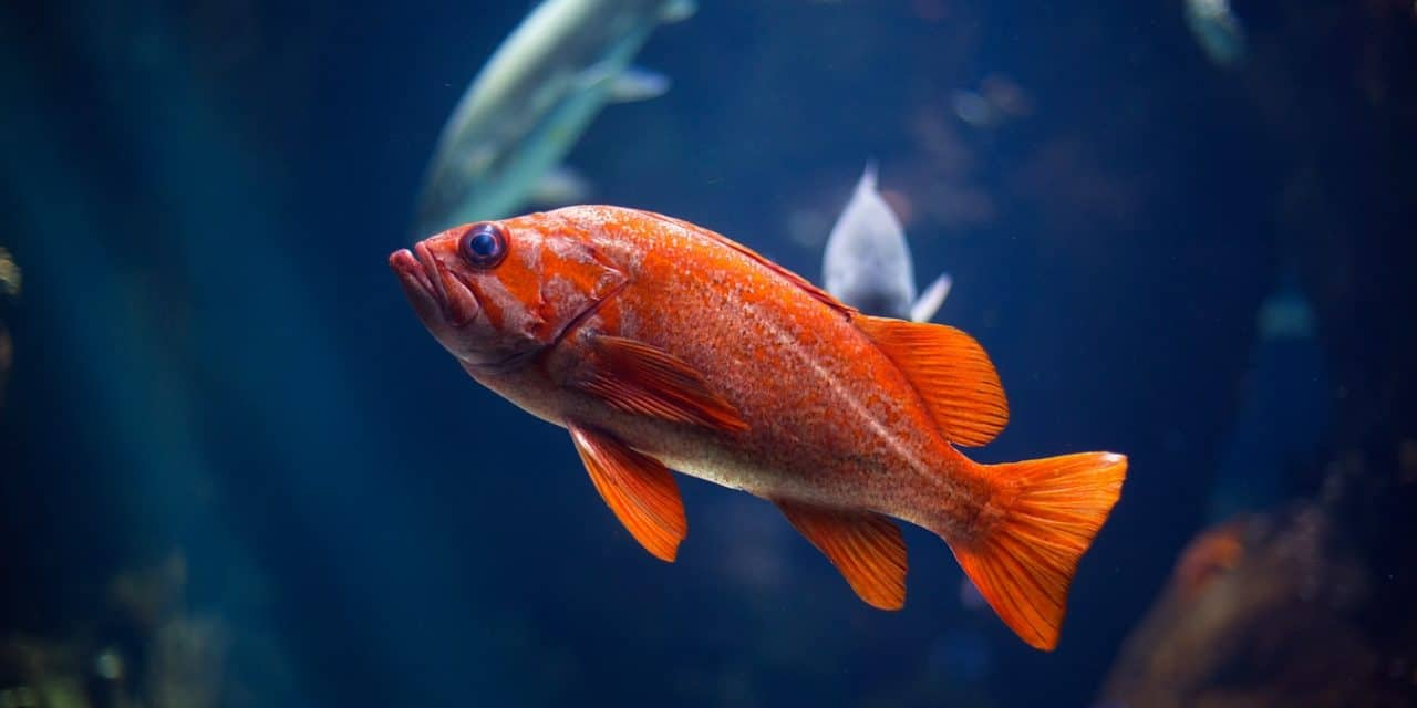 How Long Do Fish Live?