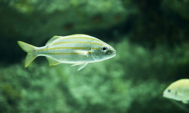 So, How Do Fish Sleep?