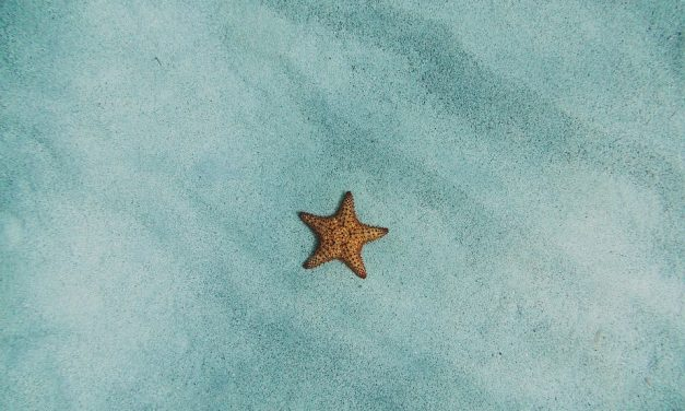 What do starfish actually eat?