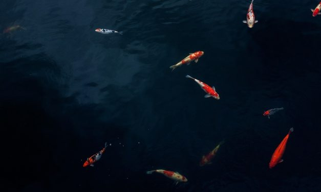 Is it Possible For Fish to Drown?