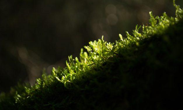 Essential Guide to Java Moss for Your Aquarium
