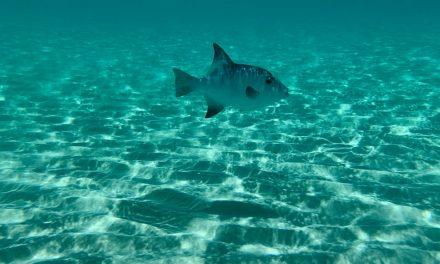 5 Best Underwater Fishing Cameras of 2021