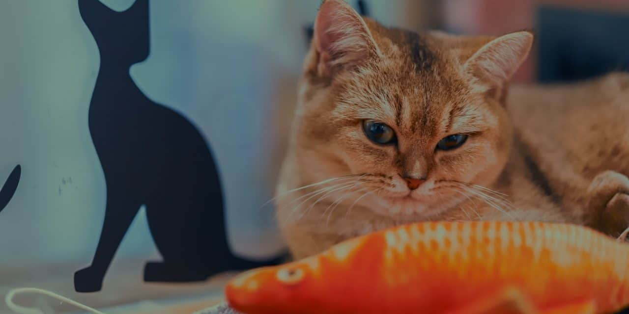 Why Do Cats Like Fish So Much?