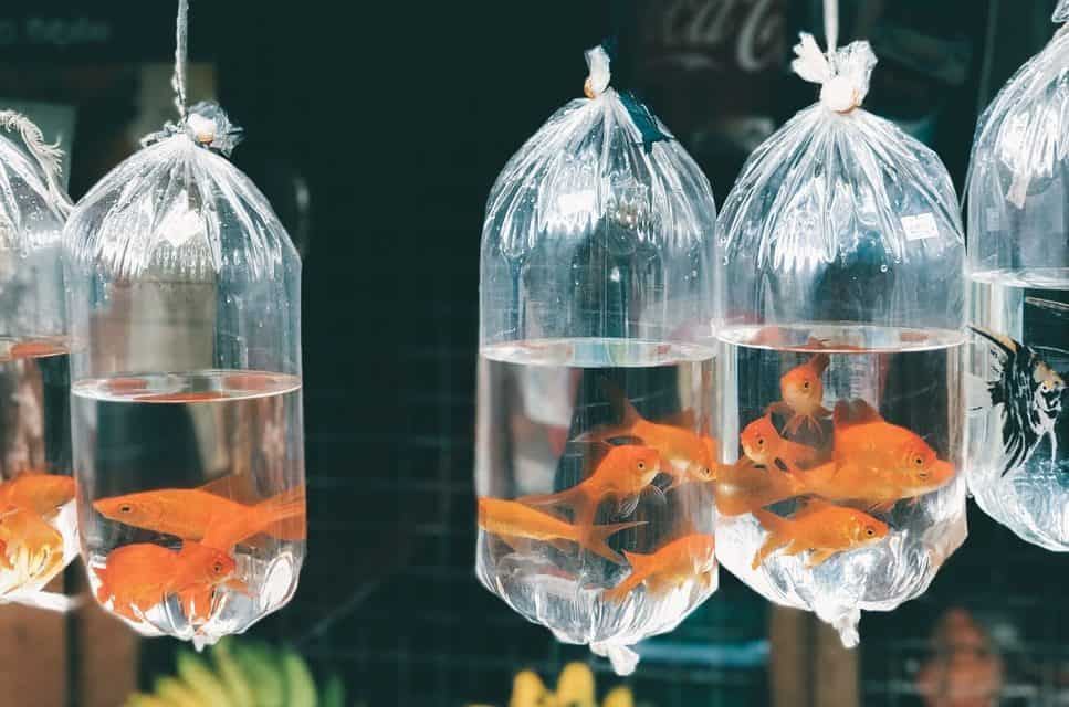 How to Safely Transport Fish in the Car