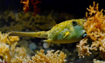 10 Types of Fish That You Should Never Eat